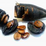 Penyakit Kencing Manis, Anemia Dan Tambah Tenaga Untuk Lelaki